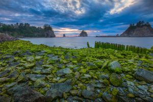 morning clouds usa trees sunset stones water nature rock olympic national park moss sea landscape forest
