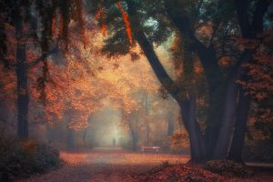 morning fall mist nature park landscape shrubs path walking trees atmosphere bench