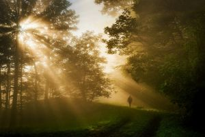 morning trees forest landscape sun rays nature grass