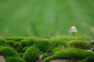 moss closeup landscape nature field macro depth of field grass mushroom