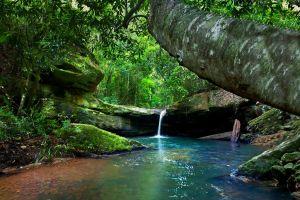 moss rock ferns forest shrubs trees landscape nature river waterfall