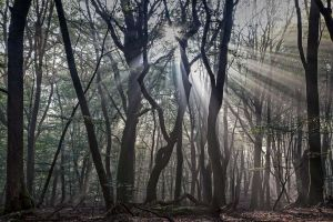 moss wood silhouette nature leaves branch dead trees mist forest trees sun rays