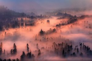 mountains nature landscape valley forest morning trees mist