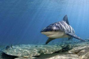 national geographic animals fish shark