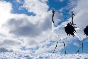nature animals birds clouds