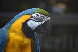 nature animals macaws birds parrot
