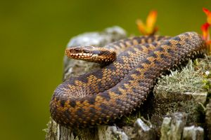 nature animals reptiles snake