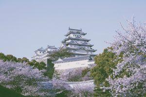 nature asian architecture himeji castle blossoms pagoda
