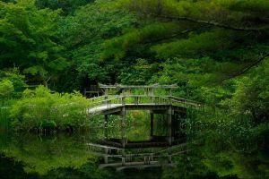 nature bridge trees
