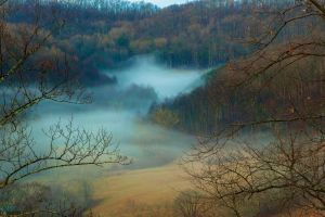 nature daylight landscape trees forest mist fall