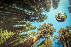 nature depth of field leaves sky hot air balloons forest worm's eye view pine trees trees
