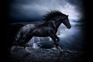 nature digital art animals horse