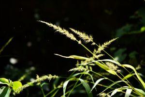 nature dust sunlight plants