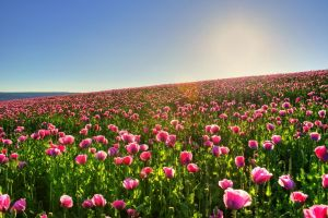 nature flowers field