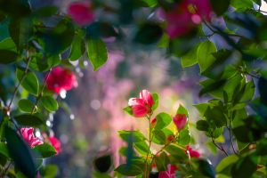 nature flowers plants leaves