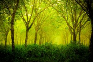 nature forest green landscape