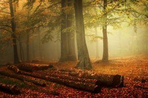 nature forest landscape leaves trees orange mist morning log fall