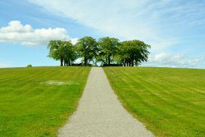 nature grass field landscape