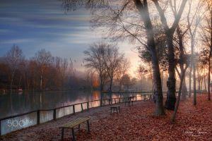 nature lake park bench fallen leaves