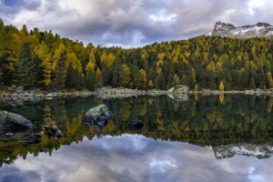 nature lake pine trees landscape switzerland