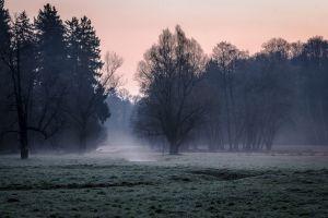 nature landscape forest grass morning trees mist