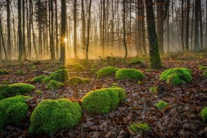nature landscape forest moss fall sun rays trees leaves