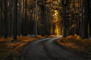 nature landscape selective coloring dirt road fall forest