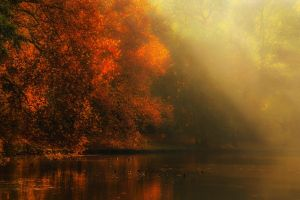nature landscape trees leaves sun rays forest atmosphere river sunlight fall mist