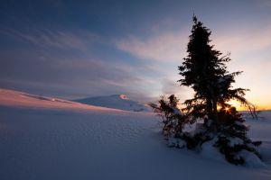 nature landscape winter snow sunset pine trees