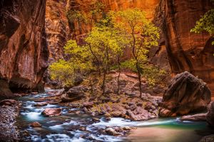 nature landscape zion national park stones trees utah usa canyon stream red valley national park river erosion hdr