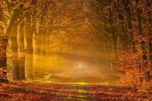 nature leaves gold tunnel landscape trees sun rays road fall