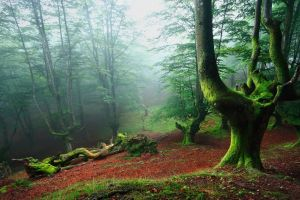 nature leaves spain green landscape mist trees forest moss