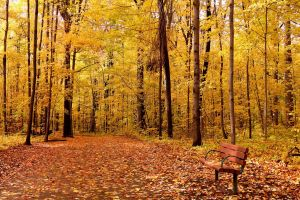 nature leaves trees forest wood path fall bench branch