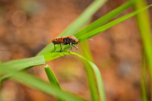 nature macro animals bokeh insect closeup wings photography