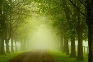 nature mist road