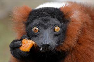 nature monkey animals