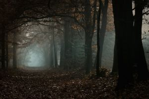 nature morning forest daylight leaves trees fall atmosphere path mist landscape