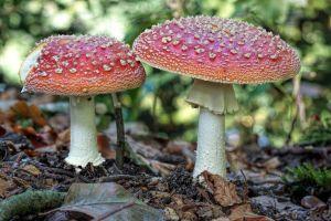 nature mushroom plants