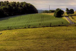 nature photography field landscape