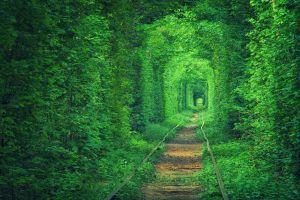 nature plants railway leaves