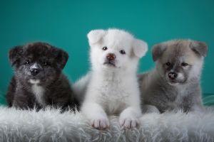 nature puppies dog