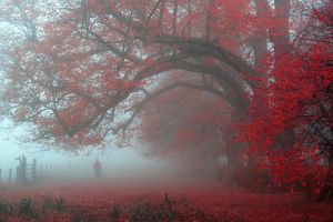 nature red atmosphere trees fall leaves mist landscape walking morning fence
