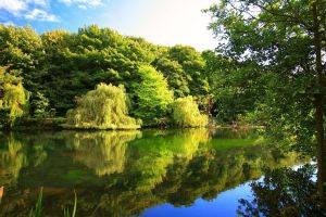 nature river landscape trees willows