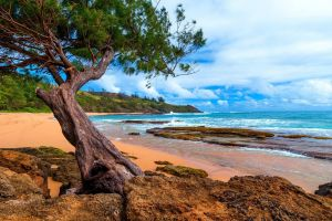 nature rock beach trees landscape peninsula sea hawaii clouds kauai island sand
