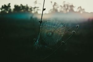 nature spiderwebs twigs