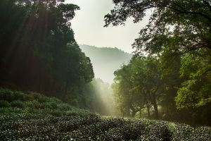 nature sun rays china west lake hangzhou mist