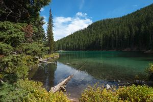 nature trees lake landscape