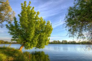 nature trees landscape lake