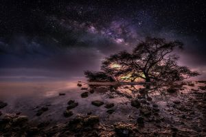 nature trees night stars water milky way