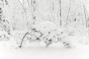 nature trees snow winter